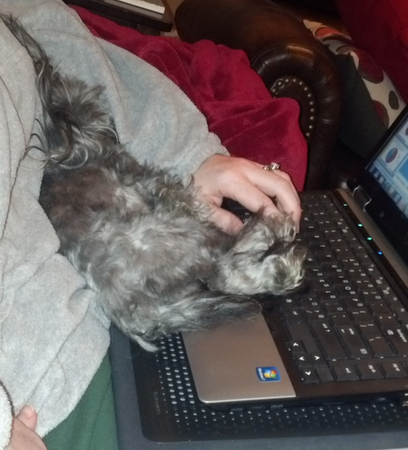 Sophie is asleep on the laptop keyboard